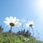 人生を充実させる思考方法。幸せの芽はじぶんで育てよう。
